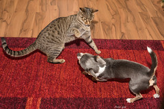 River und Rocky (Peter Goll thx for +5.000.000 views) Tags: 2017 familie erlangen germany cat dog river rocky animal tier nikon nikkor d750