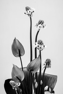 Flowers_DSC07111