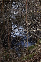 9 - De l'eau dans le ruisseau.... (melina1965) Tags: 2018 janvier january bourgogne saôneetloire saintvallier burgondy nikon coolpix s3700 hiver winter arbre arbres tree trees campagne opencountry eau water bois wood
