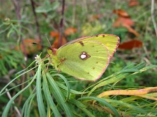 Butterfly 1560