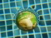 021/365: curve ball (Michiko.Fujii) Tags: refraction curveball curve light pool swimmingpool macro closeup grid submerged float floating playingwithlight blue