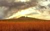 Senza titolo. (Enzo Ghignoni) Tags: casa collina nuvole alberi cipresso cielo campi canne toscana italia