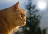 In the treetops (FocusPocus Photography) Tags: linus katze kater cat chat gato tier animal haustier pet baumwipfel treetops