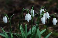 Spring (Hugo von Schreck) Tags: hugovonschreck flower blume blüte canoneos5dsr tamron28300mmf3563divcpzda010