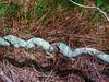 Twisted vine II (elphweb) Tags: hdr highdynamicrange nsw australia vome vines twisty twisted spiral