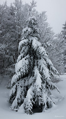 11022018-IMG_1634 (Steffan Photos) Tags: la bresse wildenstein haut rhin alsace vosges randonnée raquettes labresse grandest france fr