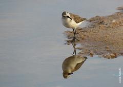 Sábado-animal (sonia furtado) Tags: sábadoanimal animal ave reflexo macau rn ne brasil brazil soniafurtado frenteafrente