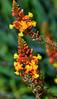 Pequeñas flores. (jagar41_ Juan Antonio) Tags: flores flor flora amarilla