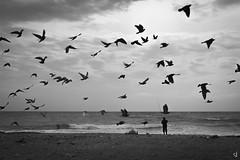 The fisherman (tzevang.com) Tags: sea greece seascape birds bythesea bwseascape beach fisherman fishing