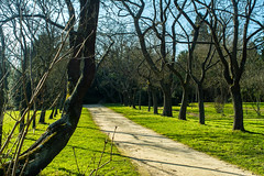 Allée d'arbres (Chrisar) Tags: angénieux3570 nikond7100 parcetjardins