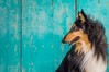 08/52 Leia & coastal airs (shila009) Tags: leia dog roughcollie portrait retrato k9 0852 52wfd turquoise turquesa door puerta blue green azul verde profile perfil breeze brisa fur air old aire viejo animal natural dogphotography backdrop