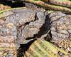 2018-02-23 13.07.31 (Standroid43) Tags: ilce7rm2 sel50m28 snp saguaronationalpark micaviewtrail saguarocactus