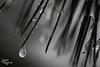 Pain (judithrouge) Tags: dark mood stimmung düster tropfen drop eis ice nadeln