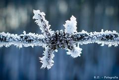 Frost (R.O. - Fotografie) Tags: frost barbed wire stacheldraht bokeh cold kalt nahaufnahme closeup close up rofotografie winter panasonic lumix dmcfz1000 dmc fz1000 fz 1000