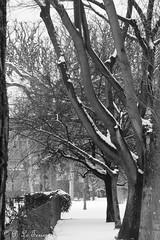 Le jardin des plantes sous la neige 02 (letexierpatrick) Tags: jardindesplantes jardin paris france europe extérieur explore nature noir blanc noirblanc black white bw blackandwhite monochrome nikond7000 nikon neige arbres arbre