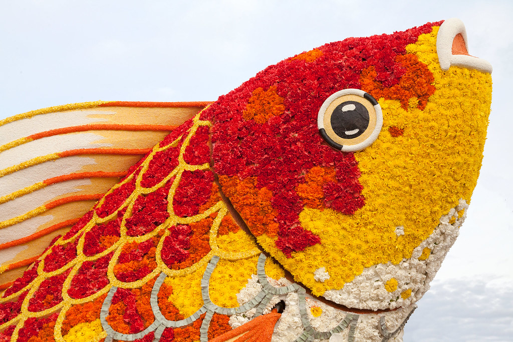 The world 39 s best photos of float and roseparade flickr for Blue fish pediatrics
