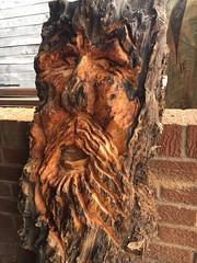 Woodspirit Yew