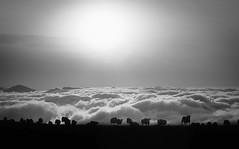Pyrenees (janter2) Tags: sheep pyrenees