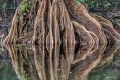 Raízes (www.celsolobo.com) Tags: celsolobo oqueviporondeandei photographyamazon wwwcelsolobocom amazonia amazon édopará caraparu ciriodecaraparu amazônia caraparu2017 fccgp ribeirinho rio círio cirio raizes
