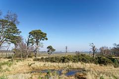 24.02.2018 Arne (15) (Kotatsu Neko 808) Tags: arne dorset england uk spb rspbarne view scenery