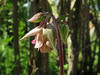 CKuchem-5840 (christine_kuchem) Tags: akelei bienenweide blüte blüten garten insekten nahrung natur naturgarten nektar pflanze privatgarten schatten schattengarten selbstaussaat sommer wildpflanze hell naturnah natürlich rosa weis wild