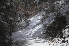 petit sentier sous la neige (bulbocode909) Tags: valais suisse forêts arbres nature montagnes hiver neige sentiers