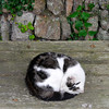 Sleeping Cat- Isles of Scilly (Alan Yeodal) Tags: isles scilly cat