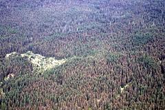 c.2003. Mountain pine beetle damage in lodgepole pine. (USDA Forest Service) Tags: usda usfs stateandprivateforestry foresthealthprotection region6 forestservice r6 forestentomology forestinsect forestprotection foresthealth aerialdetectionsurvey aerialdetectionsurveys ads aerialsurvey aerialphoto oblique mountainpinebeetle lodgepolepine mortality treedamage forestdamage barkbeetle c2003