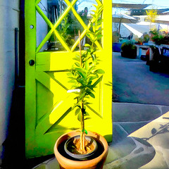 ( Another door opens ) (Wandering Dom) Tags: architecture door southern california winter sunlight pot plant photosynthesis earth multiverse humans being nothingness time life reality dreams existence outdoor roam wandering