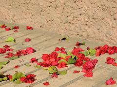 Red leaves (Shahrazad26) Tags: bougainville marrakech marokko morocco maroc rood red rot rouge