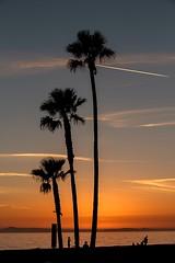 3 Palms (Karen_Chappell) Tags: travel sunset evening silhouette nature beach people orange blue palm palmtree tree three 3 california orangecounty balboabeach landscape seascape ocean pacific sky sea