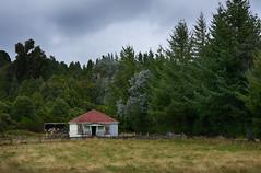 (M J Adamson) Tags: westcoast newzealand nz abandoned derelict oldhouse