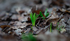 Spring is coming (nikita-a1) Tags: russia forest green winter spring russiannature krasnodar a7riii sel55f18z grow