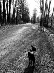 Jax leads the way (ScottElliottSmithson) Tags: dtwpuck scottsmithson scottelliottsmithson pacificnorthwest nature landscape iphone