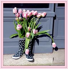 BOTTES CHAMPETRES .EXPLORE. (Marie-Laure Larère) Tags: bottes tulipe fleur explore