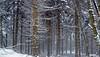 ... (♥danars♥) Tags: crocedaune neve bosco nebbia