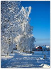 Nannestad 9. januar 2018 (#2) (Krogen) Tags: norge norway norwegen akershus romerike nannestad winter vinter landscape landskap krogen fujifilmx100