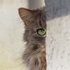 Fynnie ? It's time for the vet visit ! (FocusPocus Photography) Tags: fynn fynnegan katze kater cat chat gato tier animal haustier pet verstecktsich hiding
