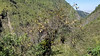 20171214_102103 (jaglazier) Tags: 121417 2017 andes bromeliads copyright2017jamesaferguson copyright2017jamesaglazier december deciduoustrees ecuador pichincha quito trees cliffs cloudforest clouds flowers forests landscapes mountains plants distritometropolitanodequito