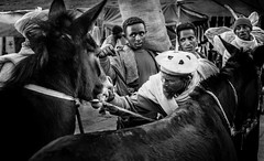 Due diligence (Frank Busch) Tags: frankbusch frankbuschphotography bw blackandwhite buyer buying donkey ethiopia laibela market monochrome trading travel watching wwwfrankbuschname