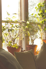 Define cozy! (*Lolly*) Tags: window plants sunlight cozy cushions morning sweden winter indoor canon europe 50mm