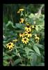 Duke Gardens July 2015 9.05.33 PM (LaPajamas) Tags: nc flora dukegardens gardens