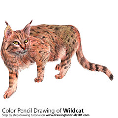 Wildcat with Color Pencils [Time Lapse] (drawingtutorials101.com) Tags: wildcat cat cats animal animals felis silvestris wild sketch sketches sketching draw drawing drawings color colors coloring pencil how timelapse video speed