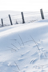 Cold (mattbrownphoto) Tags: snow ice frozen winter weather cold hartside north pennines cumbria landscape outdoors nature