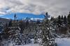 Snow-covered trees (drafiei1) Tags: snow snowcovered trees mountain snowcoveredmountains banff banffnationalpark alberta travelalberta landscape scenery scene nature naturephotography winter winterwonderland