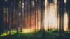 ʜᴀʟᴏ (der_peste (on/off)) Tags: forest light sunlight trees forestscape woods rays sunrays sunbeam raysoflight sunrise atmospheric moody mood strange
