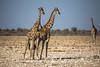 003_MG_7460 (MmeOlive) Tags: namibie girafe