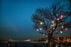 All the lights (Melissa Maples) Tags: istanbul turkey türkiye asia 土耳其 nikon d3300 ニコン 尼康 nikkor afs 18200mm f3556g 18200mmf3556g vr üsküdar evening dusk boğaz sea bosphorus water strait bridge autumn lights tree night