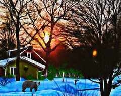 After the Dance: daybreak @ uncle walter's house (Bill Sargent) Tags: winter snow bear sunrise awardtree