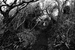 Whispering Wood (JamieHaugh) Tags: clevedon northsomerset england uk gb greatbritain sony a6000 outdoors blackandwhite blackwhite bw monochrome trees woods forest path whisper nature